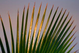 Palm Frond 33218