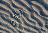 Footprint In Sand 20090222