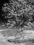 Tree Outcrop 2511 (faux IR)