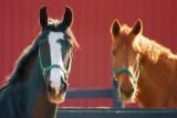 Two Horses 20090512