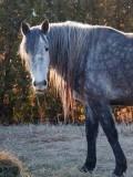 Backlit Horse 10810