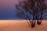 First Light Snowscape 20091225