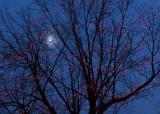 Alight at Night 12259