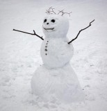 'Frosty' 12843