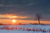 Stark Tree At Sunset 20100120