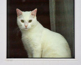 Cat In A Window 20100223
