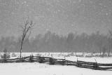 Snowstorm Snowscape 20100226