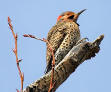 Flicker Out On A Limb 20100429