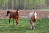 Friendly Horses 16038