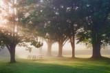 Trees At Edmonds Lock 17315