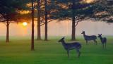 Dawn Deer 20060415