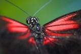 Butterfly Closeup 69860