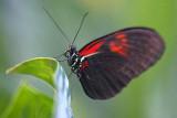 Butterfly 69883