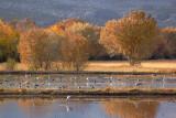 Marsh of Cranes 73082