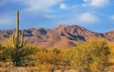 Arizona Scene 74120