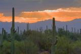Desert Sunrays 74282