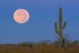 Desert Moonset 20071124