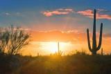Desert Sunrise 75548