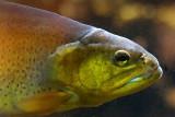 Fish Head 20080328