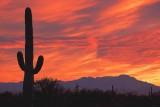 Desert Sunset 87079