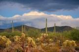 Desert Scene 75541