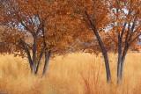 Bosque Trees 73039