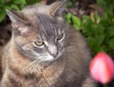 Cat Studying Tulip 88674