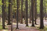 Jack Pine Trail 88832