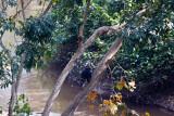 Chimpanzee_9152