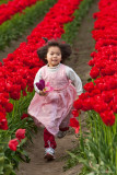Tip-toe Through the Tulips