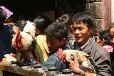 Cocks to be sacrificed, Dakshinkali, Nepal.