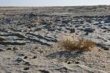 Végétation réduite parmi le calcaire