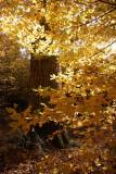 Dans la forêt domaniale