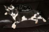 Speedy et Pupuce : Une petite sieste entre amis !