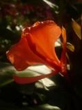 Tropical-Pete's Garden (UK)