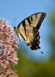 Eastern Neck National Wildlife Refuge - Butterfly Garden