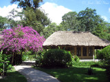 Bouganvillia and cabana at Chan Chich