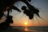 Coconuts Bar (4)