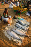 Traditional Fish Market (3)