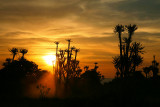 Sunset in the jungle (1)