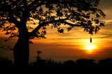 Sunset in the jungle (4)