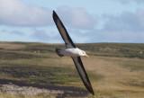 Antarctic and SubAntarctic Birds and Wildlife