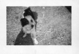 Fido 3 and a half years old in 1947.jpg