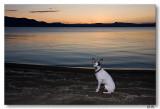 Sunrise pup