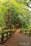 Muir Woods D300_06374 copy.jpg