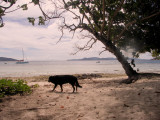 The only canine on the Seychelles