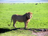 Ngorongoro: Just kind of curious here