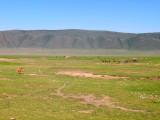Ngorongoro male