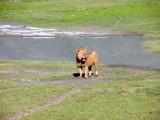 Ngorongoro: Kind of unhappy on this one