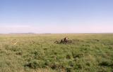 Serengeti pride chilling